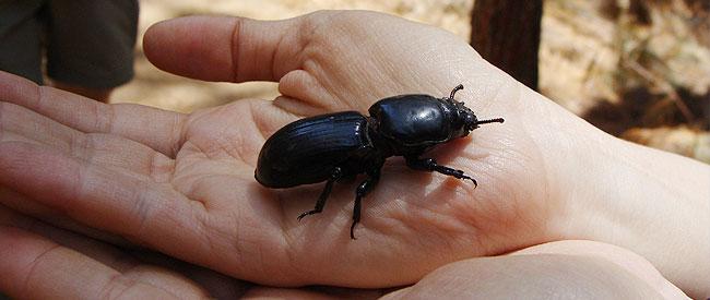 giant_bug