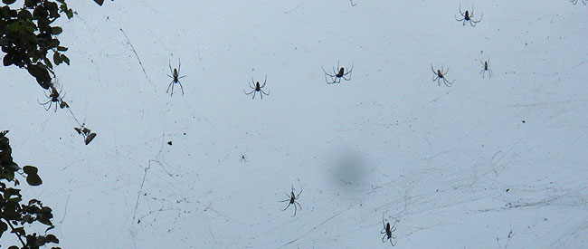 stone_town_spiders