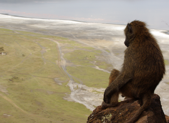 Baboon_Lookout