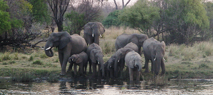 VicFalls_Elephants